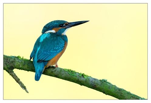 oiseausurunebranche